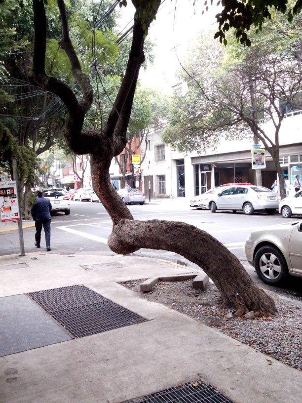 Árbol que nace torcido jamás su tronco endereza.