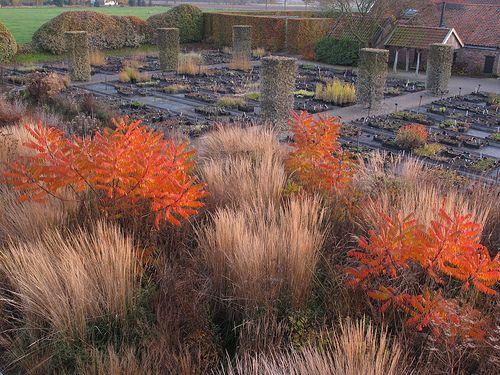 A piet oudolf garden grasses sumac a lovely fall for Piet oudolf fall winter spring summer fall