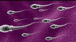 Cara Meningkatkan Kualitas Sperma Agar Berhasil Membuahi Sel Telur Wanita
