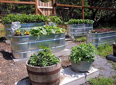 farm trough gardens: Gardens Ideas, Container Gardens, Barrels Gardens, Rain Barrels, Vegetables Gardens, Farms Trough, Backyard Gardens, Trough Gardens, Progress Reports