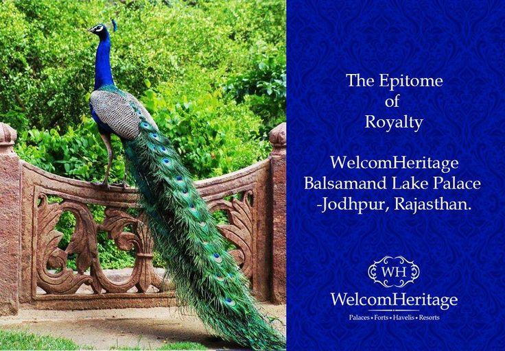 WelcomHeritage Bal Samand Lake palace, Jodhpur.. #peacock #kingdom #Palace #heritage #history #culture #Rajput #architecture #terrace #gardens #royal #retreat #lushgreen