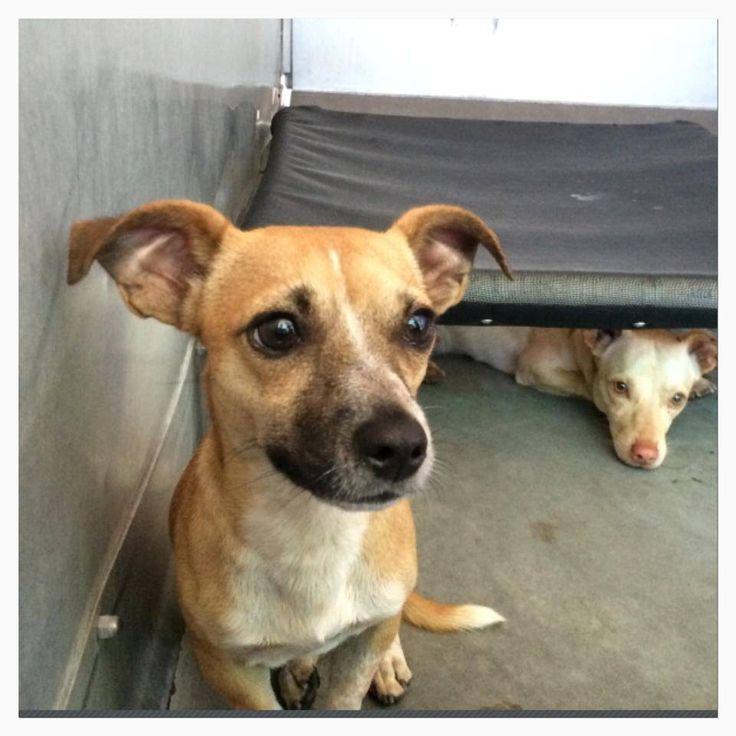 Adopt A Dog Conshohocken