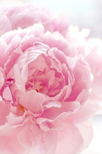 Peony (from Wonderful Places, at blogspot)