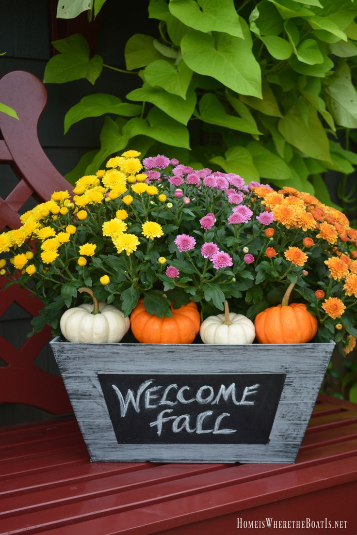 Decorating Around Harvest Gold Bathroom: 17 Best Ideas About Mums And Pumpkins On Pinterest