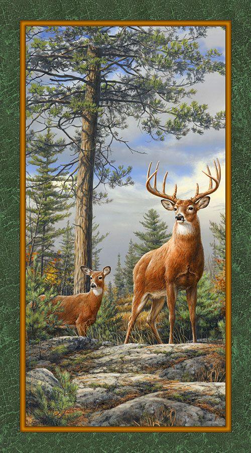 173 Best Wild Animals Images On Pinterest Conservation