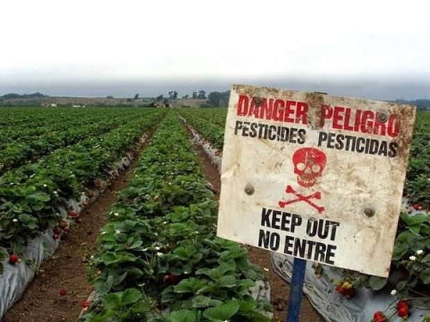 ESTUDIO DETERMINA LOS NOCIVOS EFECTOS  DE PESTICIDAS EN PÁJAROS, GUSANOS Y ABEJAS  Fuente/biobiochile/2014/06/24 https://www.facebook.com/ChiledesarrollosustentableCDS