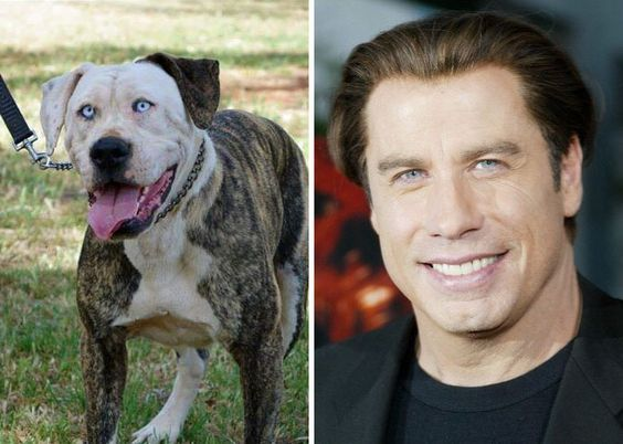 Do you see the resemblance between this pooch and John Travolta? We do!