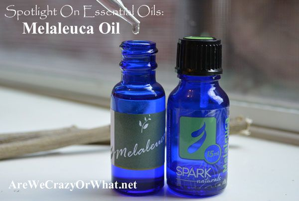 Spotlight On Essential Oils: Melaleuca Oil (Tea Tree Oil)~AreWeCrazyOrWhat.net