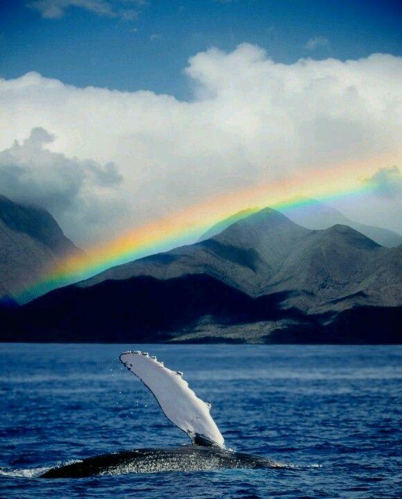 Maui, Hawaii. Whale season is so neat.