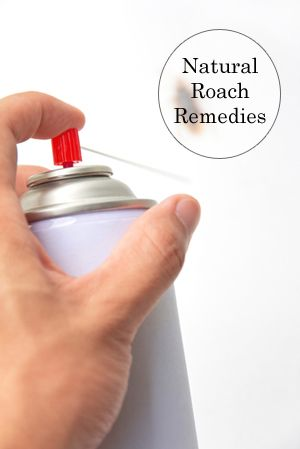 "Natural Roach Remedy - do-it-yourself exterminator store there and bought a product called ""Demon."" He was told it was made from some plant and was harmless to children and pets."