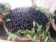 Jamun (Black Plum) Controls Blood Sugar levels