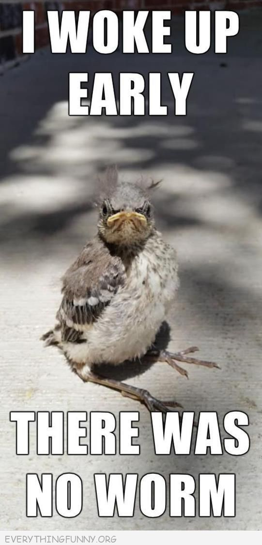 Funny Bird Pictures with Captions   funny caption ugly bird i got up early there was no worm