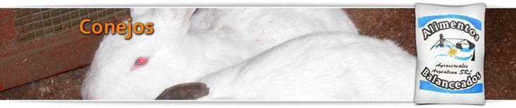 Elaboramos alimentos para ser usados en la producción de conejos. Más info en: http://www.agrocerealesargentina.com/balanceado/balanceado-conejo.html