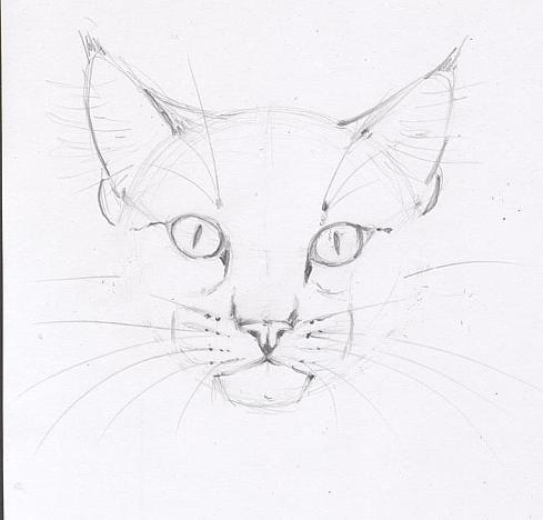 Мои самые выдающиеся рисунки котов и кошек / личный блог Илюха_обычный пацан / smotra.ru