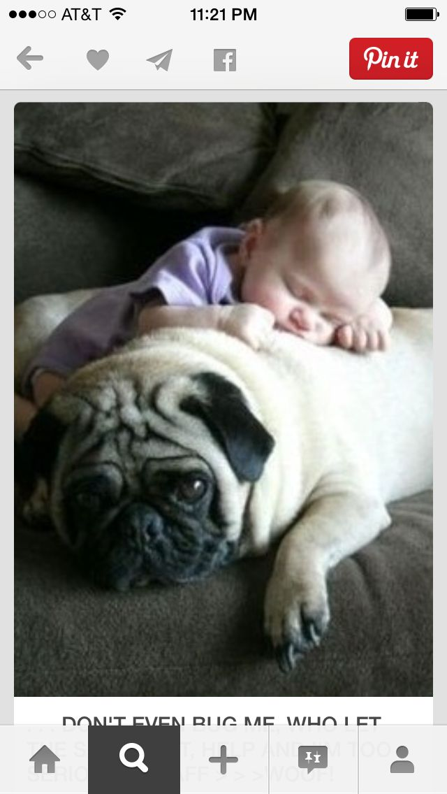 Best Pug Images On Pinterest Pug Animals And Feelings - 30 adorable pictures babies puppies will melt heart