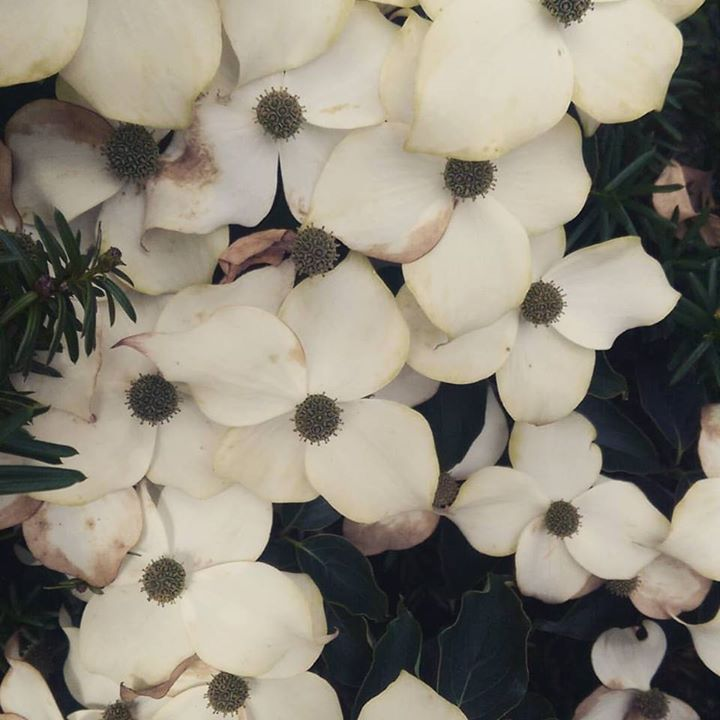 It's got flowers  #flowers #natureisawesome #naturelove #nature