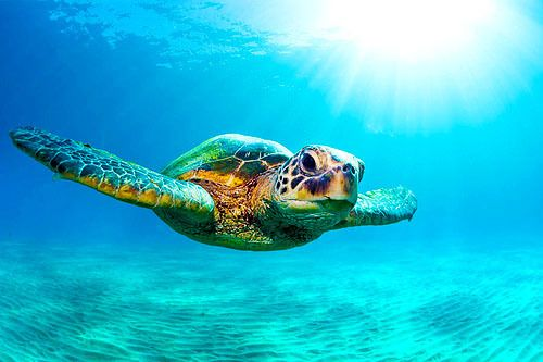 Just keep swimming swimming swimming...Bucketlist, Buckets Lists, Keep Swimming, Seaturtle, Myers Beach,  Loggerhead Turtle'S, Loggerhead Turtles, Sea Turtles, Beautiful Creatures