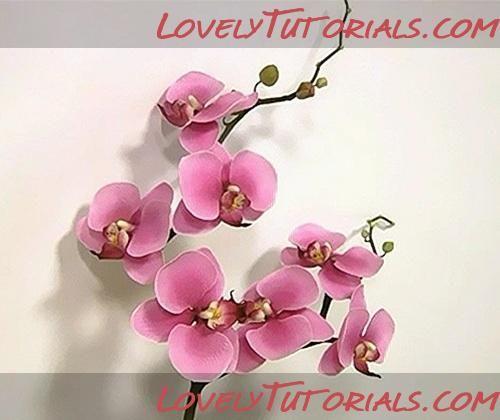 orchid tutorial 100 pics