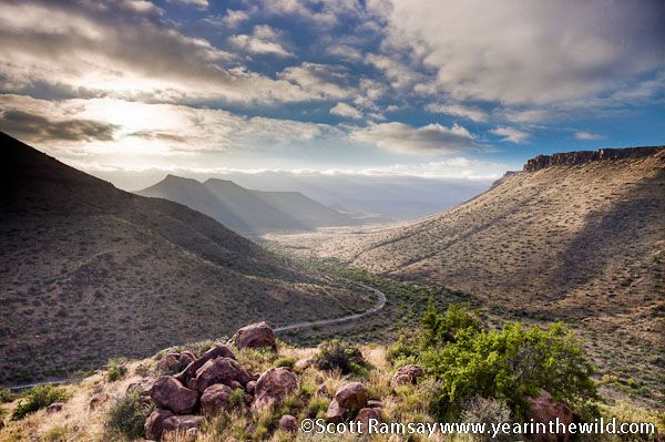 What the Karoo is all about – space, silence, and a winding, empty road... This is the Klipspringer Pass in the Karoo National Park - See more at: http://www.wildcard.co.za/blog.htm?action=view-postid=4188#sthash.HKszRls2.dpuf