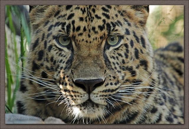Animals in San Diego, United States (most endangered big