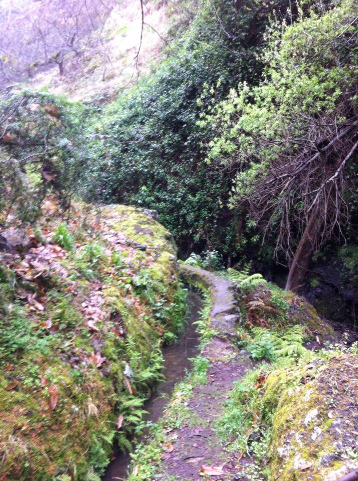 Levada sti på Maderia