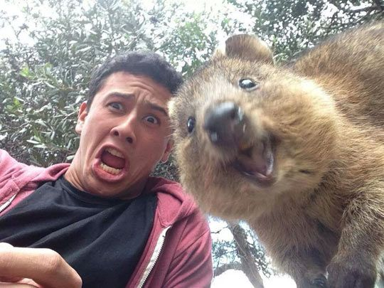Quokkas are ridiculously photogenic…
