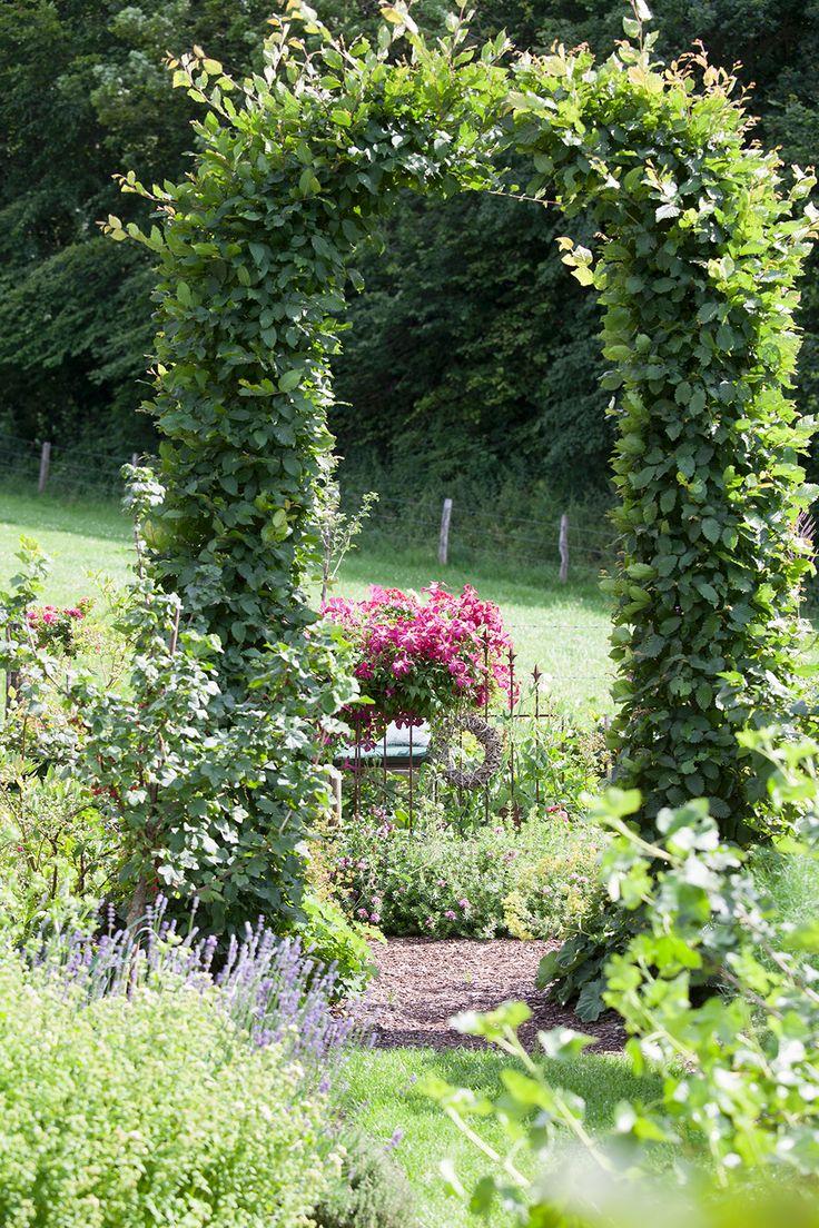 17 migliori idee su arco da giardino su pinterest archi for Arco decorativo giardino