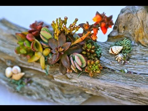 37 best images about succulent design how to on pinterest gardens may days and mom - Succulent container gardens debra lee baldwin ...