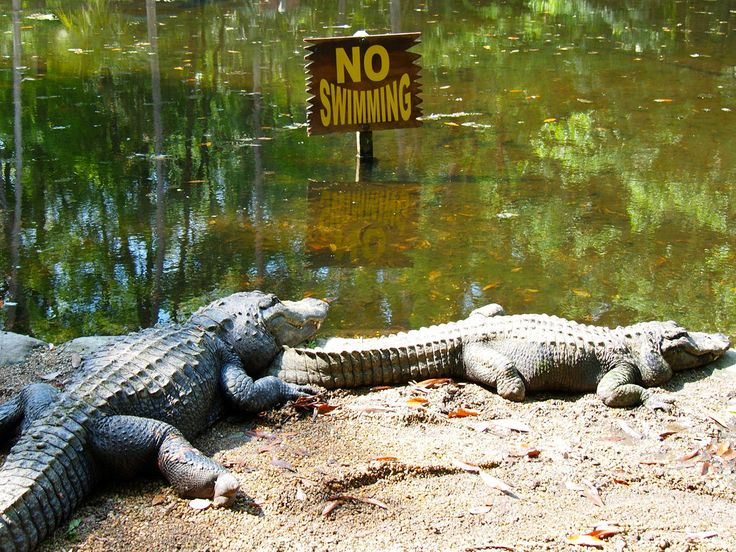 Homosassa Springs State Wildlife Park in Florida