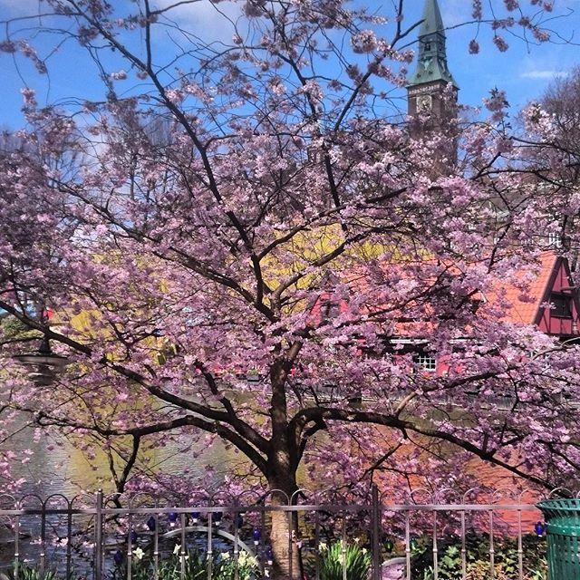 Ønsker dere god morgen med dette bilde fra en københavntur i våres. I wish you a good morning with this picture from copenhagen. #morgen#morning#københavn #copenhagen #inspo #bilde#picture#tre#tree#relaxation #ferie#holiday#instamood #inspirasjon #atmosfære #eventyrlig#farytail