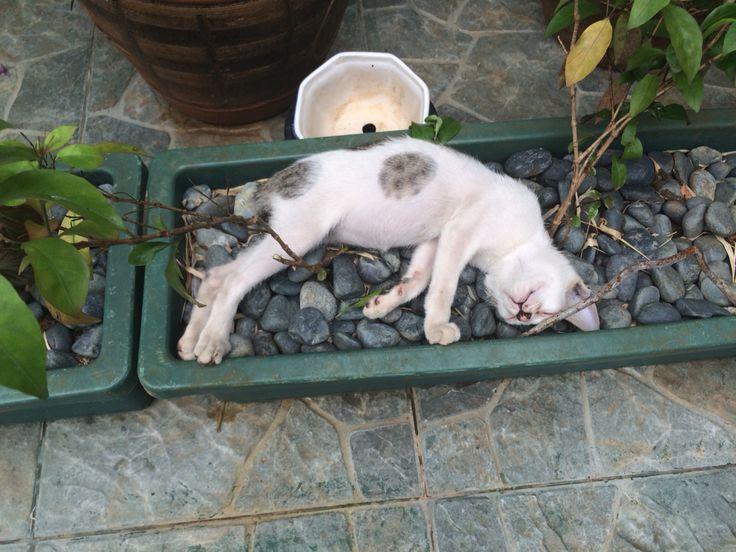 Sleeping position 2