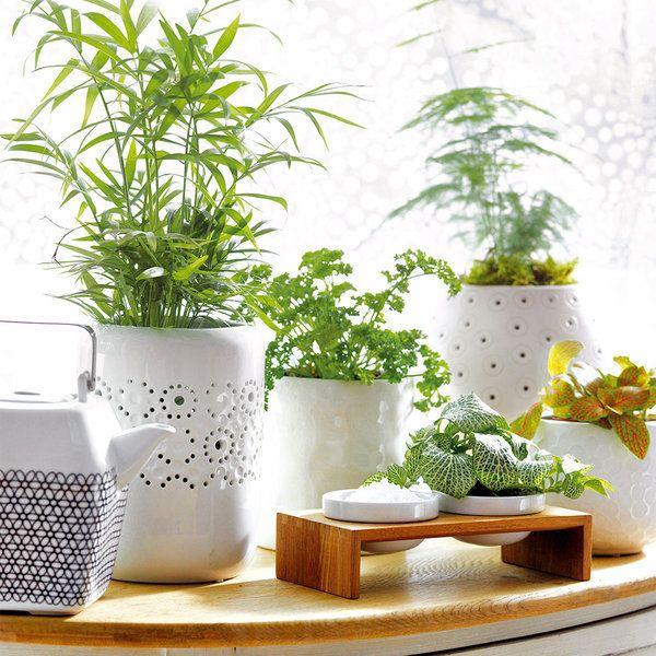 Las 25 mejores ideas sobre plantas de interior - Plantas de interior resistentes ...