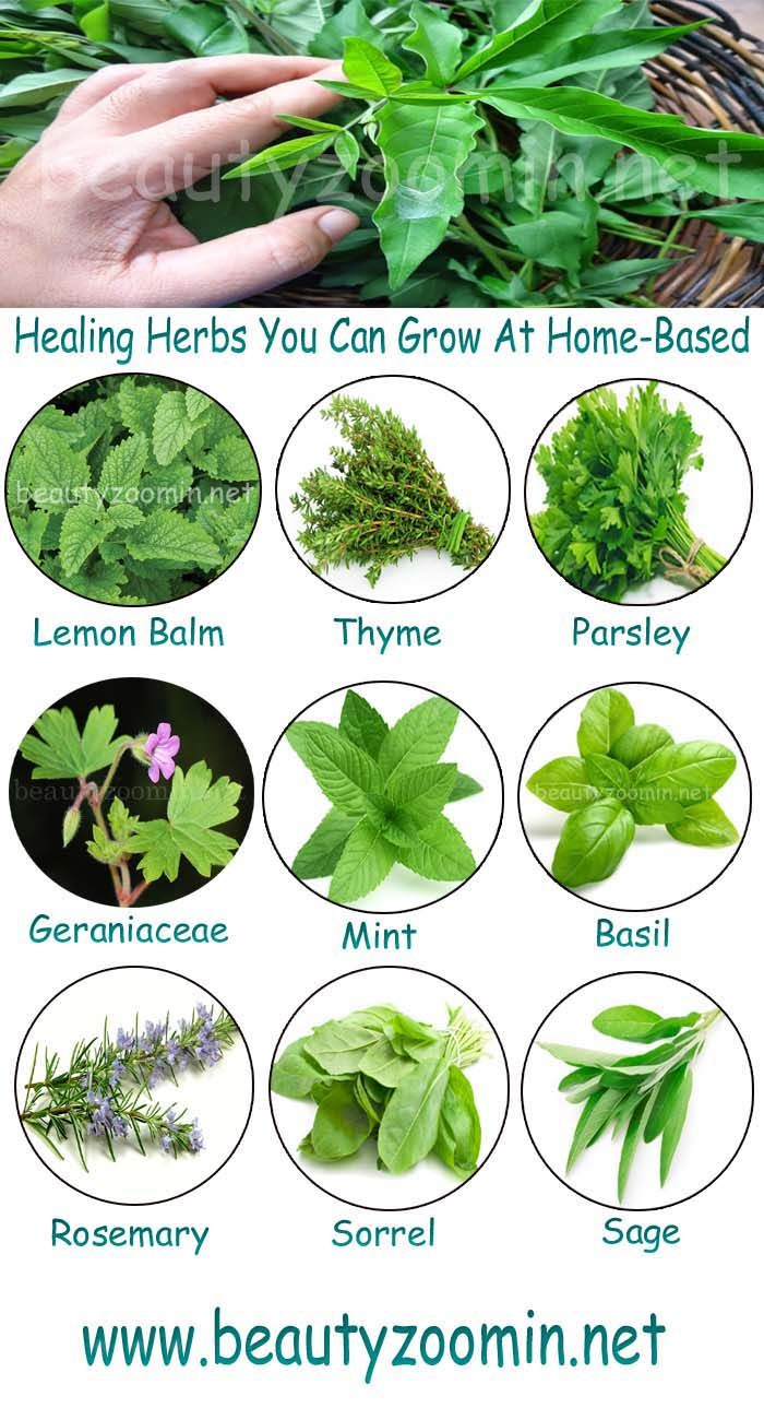 Healing Herbs You Can Grow At Home-Based | Herbs and