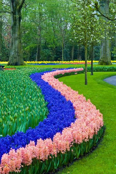 Keukenhof Gardens, Netherlands - ©/cc Dan Hutcheson (wildphotons) - www.flickr.com/photos/wildphotons/5616172975/