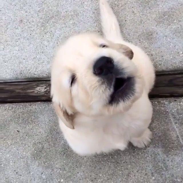 Awww too cute