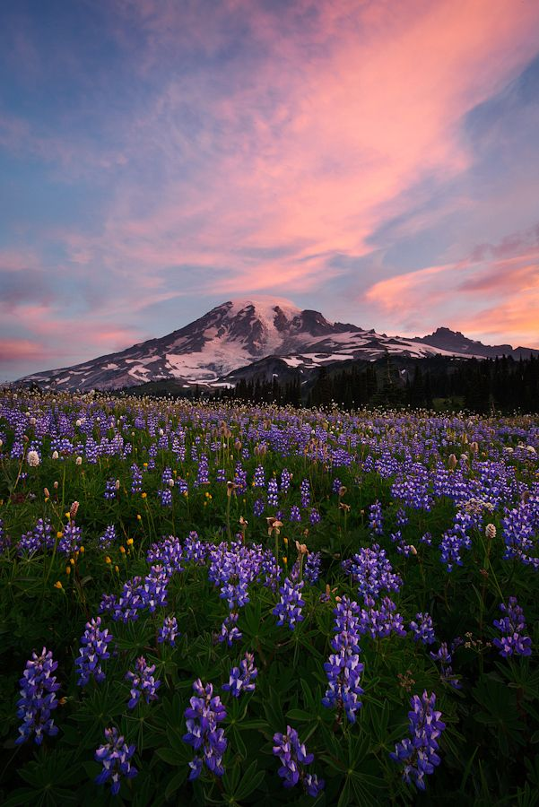 Quot Sunrise Light Photographed Above Mt Rainier And A