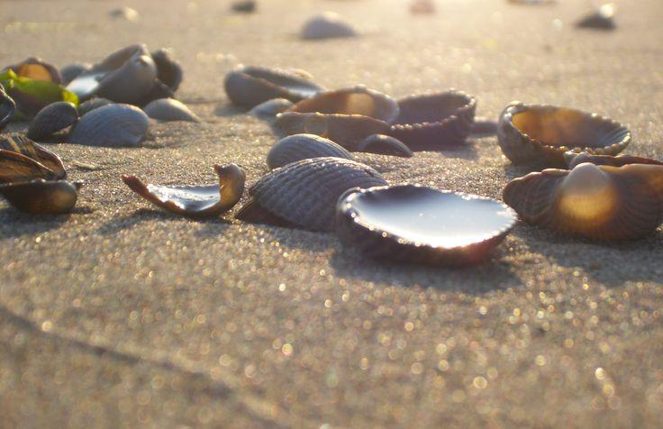 De zomer is hét moment om schelpen te zoeken langs het strand.