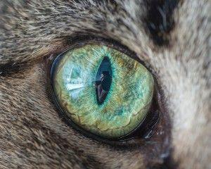 fascinantes-fotografias-de-olhos-de-gatos-por-andrew-marttila (3)
