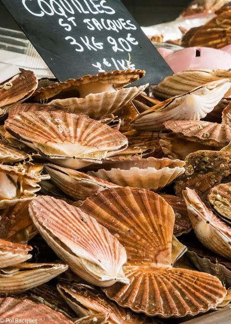 """Le Crotoy, Picardy, France. Buying fresh """"Coquilles Saint Jacques"""" for tonight !...delightful ! by Pol Bacquet on Google+"""