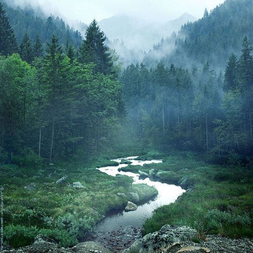 Travel: Magic Forests, Mountain, Wood, Nature, Beautiful, Rivers T-Shirt, Trees, Places,  Vale