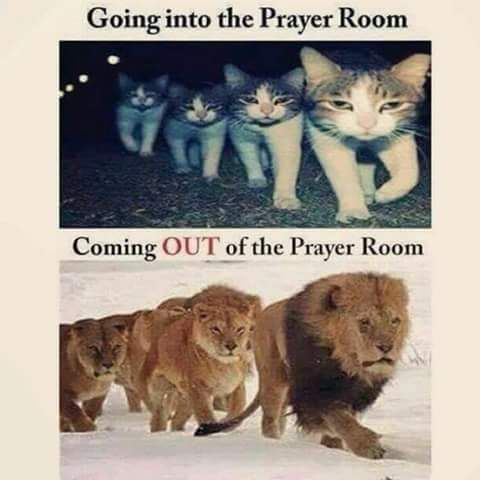 going into the prayer room like a cat and coming out of. Black Bedroom Furniture Sets. Home Design Ideas