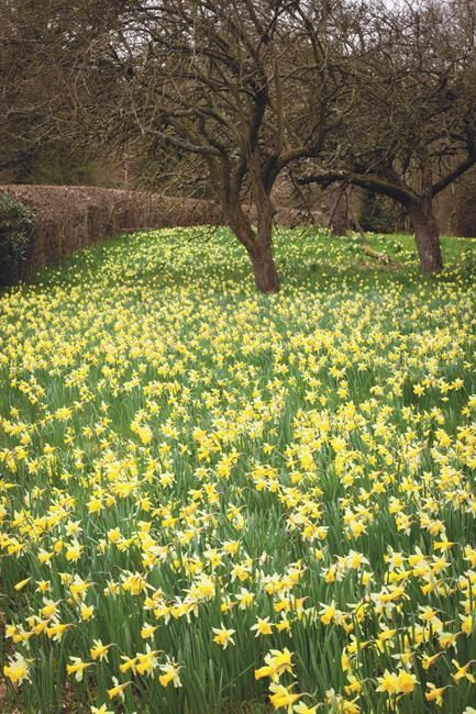 Tips and advice on how to naturalise bulbs in grass, for beautiful displays that come back year after year.