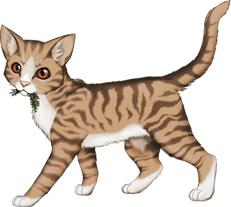 Leafpool Carrying Back Herbs For Her Clan.