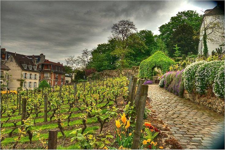 Виноградник Монмартра занимает участок площадью в 1566 м², на котором произрастает 1762 виноградные лозы, что ежегодно позволяет получать 400—500 литров монмартрского вина (900-1000 бутылок). Всего здесь культивируется 27 сортов винограда.