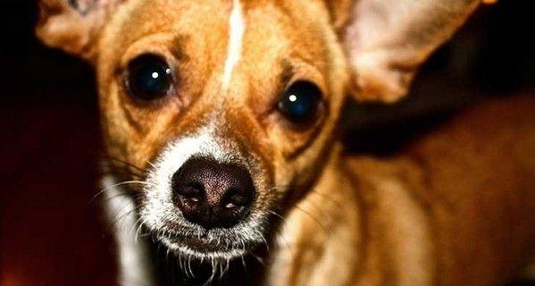 Estas extrañas cruzas de perros te harán amar mucho más a los mestizos