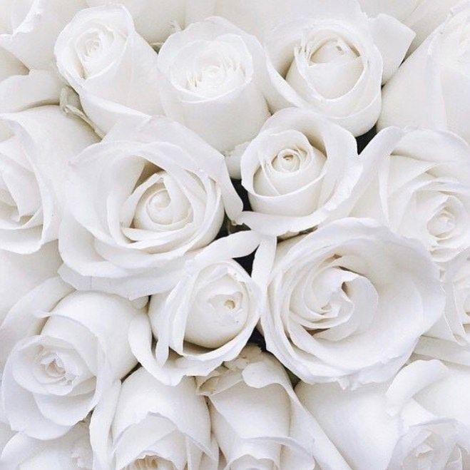 Petit A Petit Loiseau Fait Son Nid Fond D Ecran Colore Fond D Ecran Telephone Rose Blanche