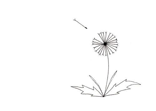 Best 25 dandelion drawing ideas on pinterest dandelion for How to draw a dandelion step by step