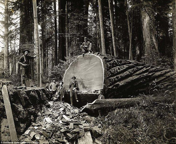 Image result for lumberjack equipment bc 1850