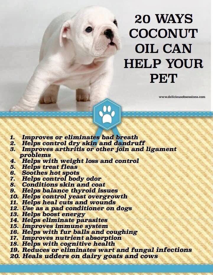 Many use coconut oil to help with dog allergies.  Just mix a 1/2-1 tablespoon (or more for bigger dogs) in each meal daily.