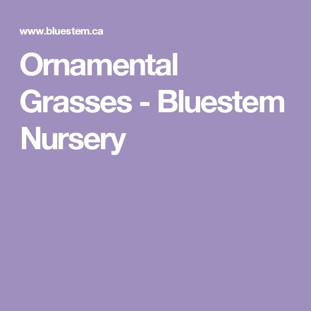 Ornamental Grasses - Bluestem Nursery
